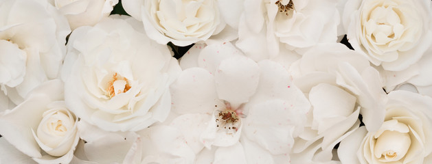 Panoramic Floral light nature background of white roses