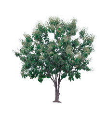 tree of isolated tree on white background,Used with natural articles both on print and website.(object with Clipping path) - Image