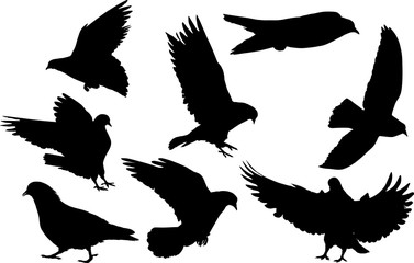 eight pigeon black isolated silhouettes