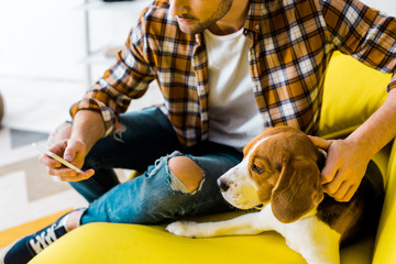 cropped view of man using smartphone while sitting on sofa with cute dog