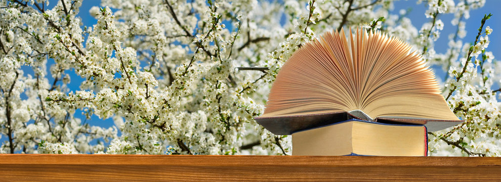 open book on blossoming tree background