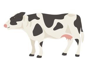 ホルスタイン 乳牛