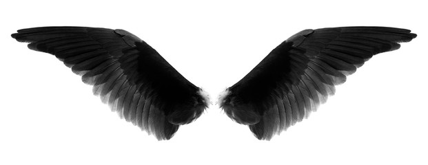 black wings of egle isolated on a white