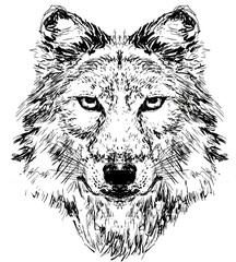 wolf head hand drawn illustration,art wall inspiration