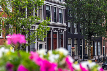 White and pink flowers in front of traditional houses in Amsterdam