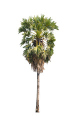 sugar palm isolated on white background,selective focus