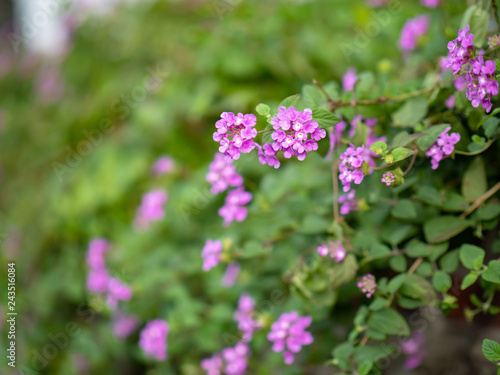Little Purple Flowers Stock Photo And Royalty Free Images On