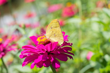 Butterflies in a beautiful flower garden