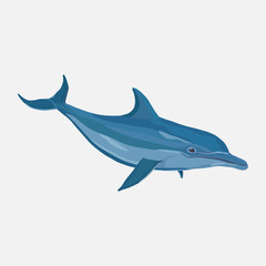 icon realistic dolphin, water park, entertainment