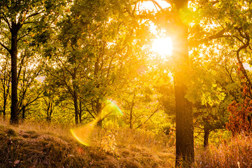 Fairytale autumn forest. Rays of warm sun light illuminate the colorful foliage. Autumn landscape.