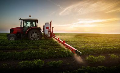 Fototapeta Tractor spraying pesticides at  soy bean field obraz