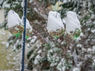 Meisenknödel im Winter