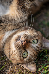 Cute and funny cat lying on the ground.