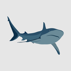 shark on a white background, shark attack, the danger in the oce