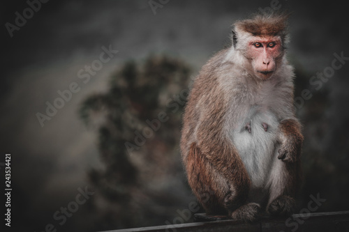 Toned Picture Of Scary Monkey With Red Eyes Wathing In The Camera