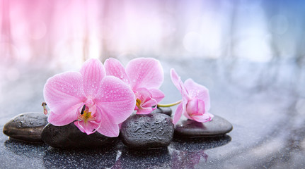 Tuinposter Orchidee Spa background with pink orchid and black spa stones.