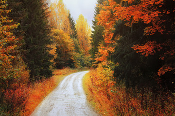 Autumn forest. Road among the autumn trees