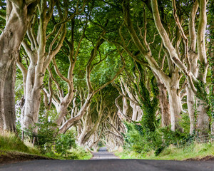 "world famous ""Dark Hedges"" on the Bregagh Road in County Antrim in Northern Ireland"