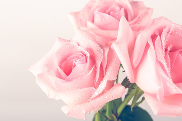 bouquet of pink roses isolated on light background