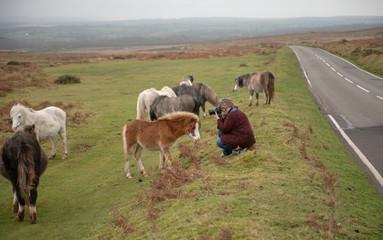 Mature woman taking photos of wild horses