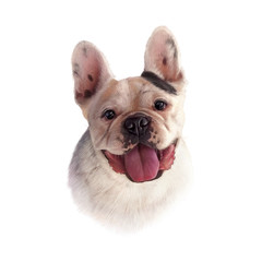 Illustration of French Bulldog isolated on white background. Dog is man's best friend. Animal collection: Dogs. Realistic Portrait - Hand Painted Illustration of Pets. Good for banner, T-shirt, card
