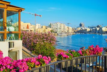 The flowers on Sliema coast, Malta Fototapete