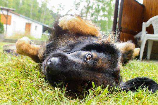 Funny mix breed scruffy dog staring to a camera
