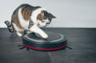 Funny tabby cat playing with a robot vacuum cleaner.
