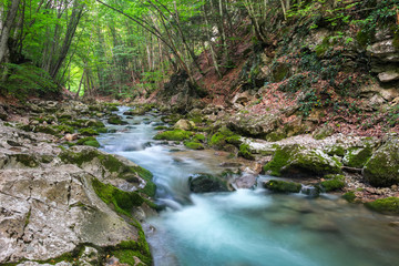 Mountain river in summer. Water stream at forest. Composition of nature