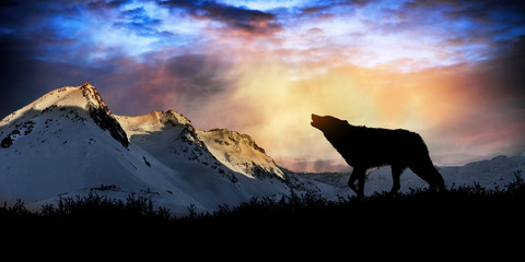 wolf howling at sunset