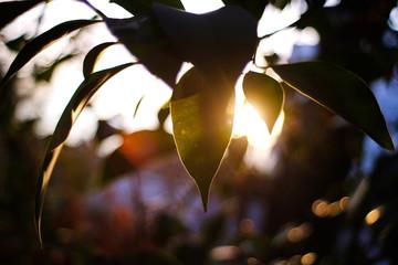 riflesso di sole sulle foglie