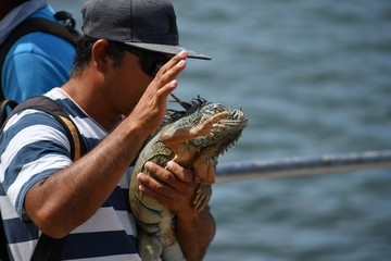 A man and his iguana at the harbor of Mazathlan-Mexico.