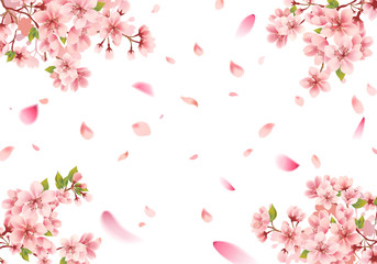 Cherry blossom sakura frame on white background Wall mural