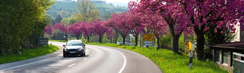 Auto, Straße, Frühling, Kirschbäume