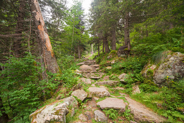 A stone-paved path climbs into a coniferous forest in the mountains.