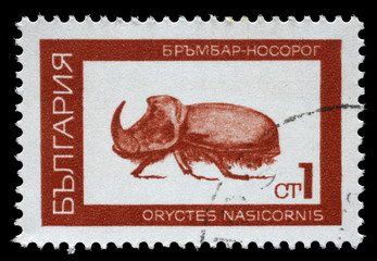 Stamp printed in Bulgaria shows European rhinoceros beetle (Oryctes nasicornis), series beetle, circa 1968