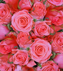 light red roses flowers background
