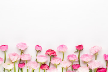 Beautiful colored ranunculus flowers on a white background.