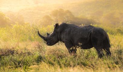 Poster Neushoorn Männliches Nashorn in Südafrika