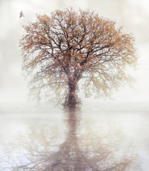 A dove flies towards an autumn tree that is reflected in the water.