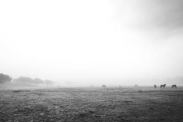 Horses on meadow in fog
