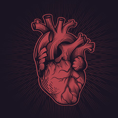 Human heart in engraving technique with star rays on dark background. Anatomically correct hand drawn line art. Tattoo, tee shirt print design. Vector illustration.