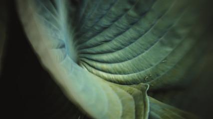 Formatfüllende Nahaufnahme von Blättern in grün
