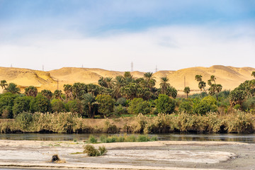 Palm trees and greenery on the banks of the River Nile in Egypt