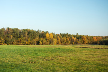 A large green meadow, autumn forest and clear sky