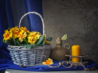 Still life with basket of yellow primula