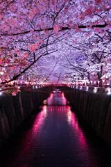Poster Bordeaux 川と夜桜