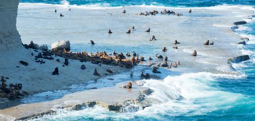 Rookery of fur seals on Valdes peninsula
