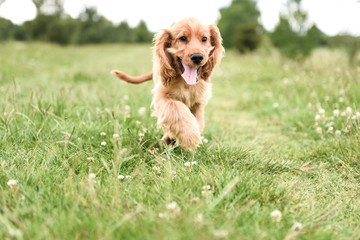 3 Month Old Puppy Walk