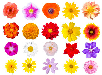Big Collection of top view flowers isolated on white background